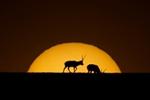 可可西里:白天不懂夜的美