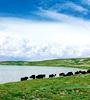 7亿续力三江源生态保护建设