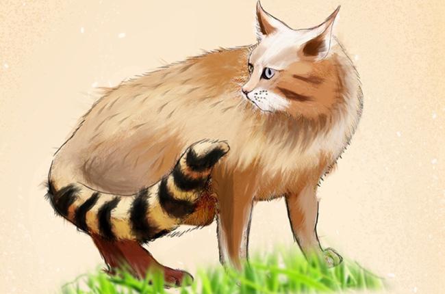 一組手繪,帶你走進高原野生動植物世界