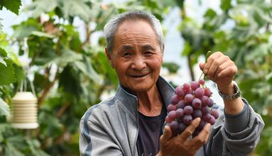 青海平安︰果蔬示範園促增收