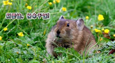 打卡三江源(yuan)國家公園|三江源(yuan)野生動物的mu)砂 粘 /></a></li><li style=