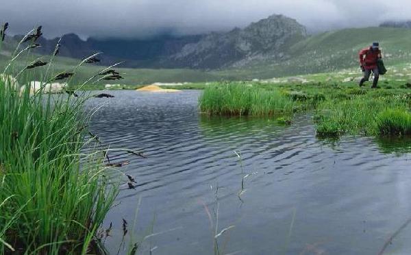 打卡三江源(yuan)國家公園|水中(zhong)綻放的雲生毛茛